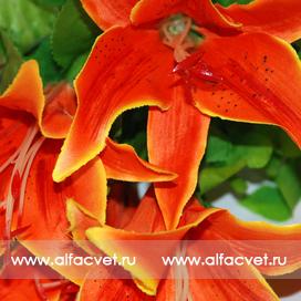 лилии цвета оранжевый 2