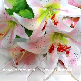 лилии цвета светло-розовый 9