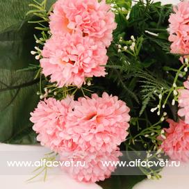 маргаритки цвета светло-розовый 9