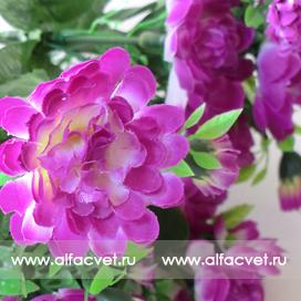 маргаритки цвета фиолетовый 7