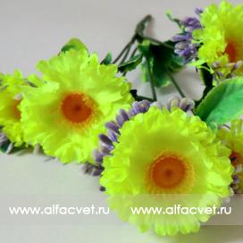 букет маргариток (розетка) цвета салатовый 39