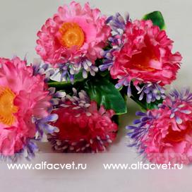 букет маргариток (розетка) цвета розовый 5