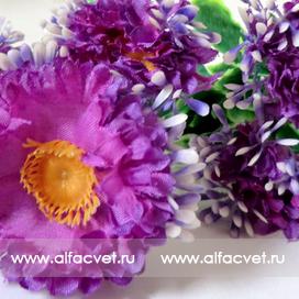 букет маргариток (розетка) цвета фиолетовый 7