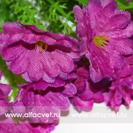 мох цвета фиолетовый 7