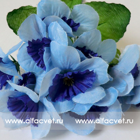 нарциссы цвета синий 12