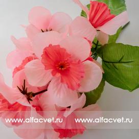нарциссы цвета розовый с белым 14