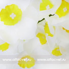 букет нарциссов цвета белый с желтым 13