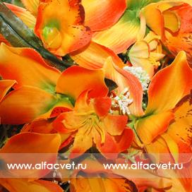 орхидеи цвета оранжевый 2