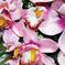 искусственные цветы орхидеи цвета сиреневый 8