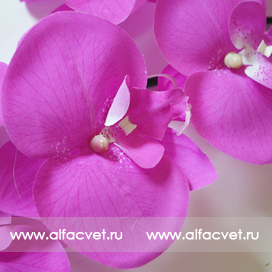 орхидеи цвета сиреневый 8