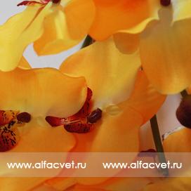 букет орхидеи цвета желтый 1