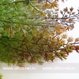папоротник c крупными листьями цвета зеленый с бордовым 31