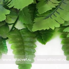 папоротник с широкими листьями цвета зеленый 59