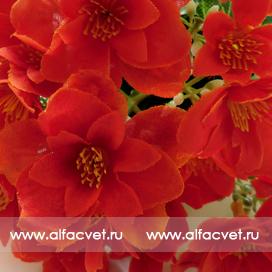Купить первоцвет интернет магазин искусственных цветов Альфацвет ... 34833266670de