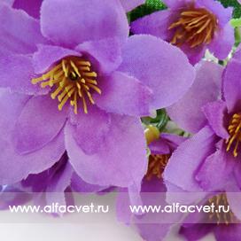 первоцвет цвета фиолетовый 7
