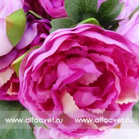 букет пионов цвета фиолетовый с сиреневым 50