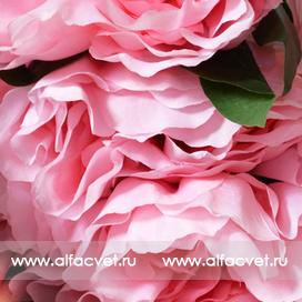 пион цвета розовый 5