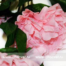 ветка пиона цвета розовый 5