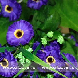 ромашки цвета фиолетовый 7