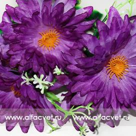 букет ромашек цвета фиолетовый 7