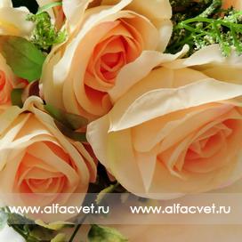 розы цвета чайный 3