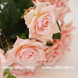 розы цвета светло-розовый 9