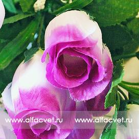 букет роз цвета фиолетовый с белым 15