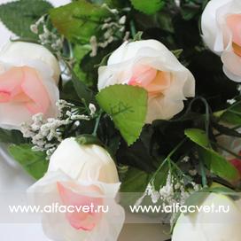 розы цвета белый с розовым 19