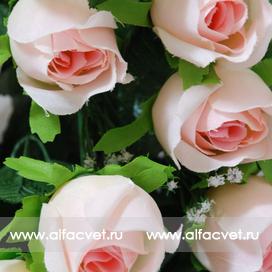 розы цвета розовый 5