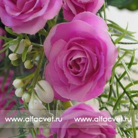 розы цвета сиреневый 8