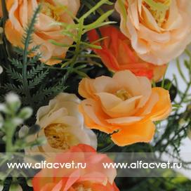 розы цвета оранжевый с белым 16