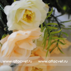 розы цвета кремовый с белым 40