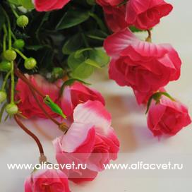 розы цвета малиновый с белым 37