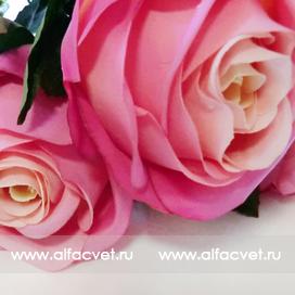 букет роз цвета малиновый 11