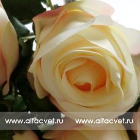 букет роз цвета кремовый 24