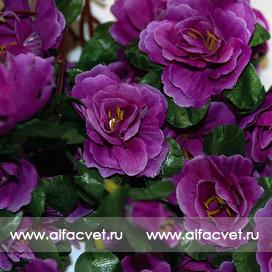 розы цвета фиолетовый 7
