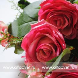 розы цвета малиновый 11