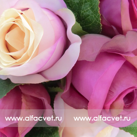 букет роз цвета фиолетовый с сиреневым 50