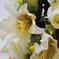 искусственные цветы розы и лилии цвета белый 6