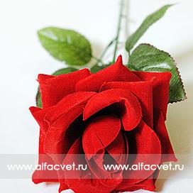роза бархатная цвета красный 4