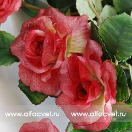 маленькие розы цвета малиновый 11