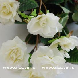 маленькие розы цвета белый 6