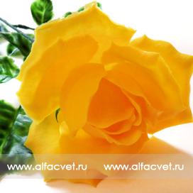 розы пластмассовые цвета желтый 1