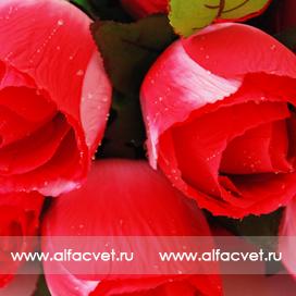розы с каплями цвета красный 4