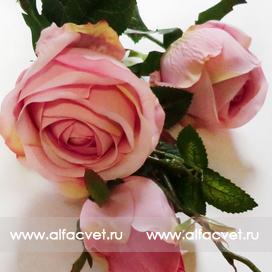 ветка роз цвета розовый 5
