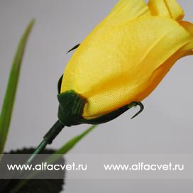 роза цвета желтый 1
