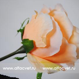роза цвета кремовый 24