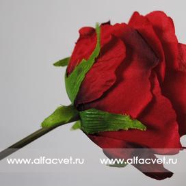 роза цвета красный 4