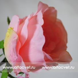 роза цвета светло-розовый 9