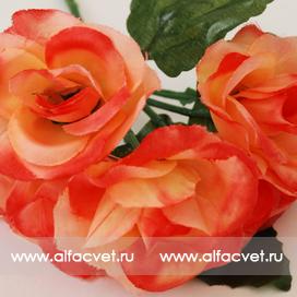 роза-фиалка цвета оранжевый 2